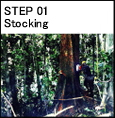 Step 01 Stocking